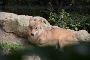 Zurich Zoo 2014, © Silvio Suter